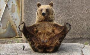 20150724 Yoga Bear